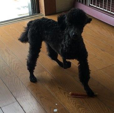 保護犬シェルター通信スキップ