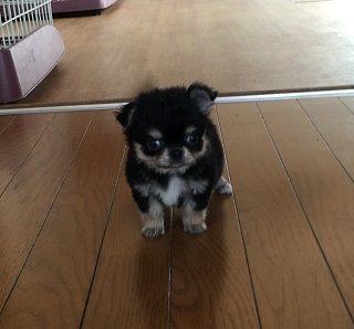 保護犬ジョジョ